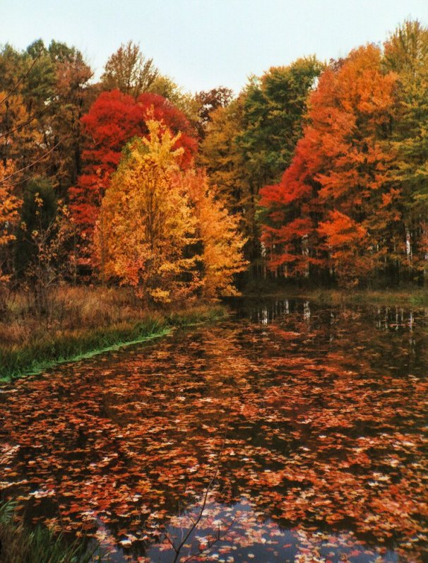 fall_pond_with_colorful_trees