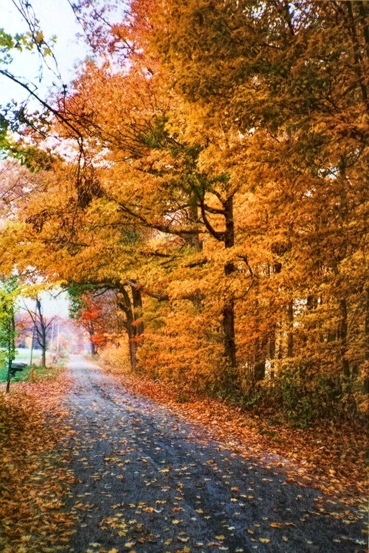 autumn trees along roadside