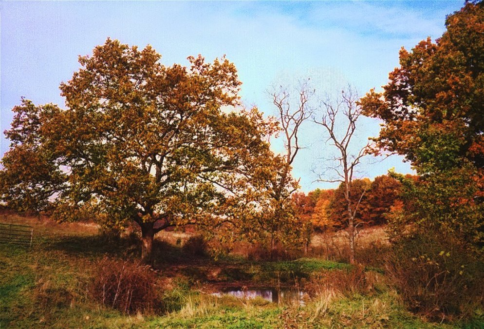 autumn trees in hollow with small pond