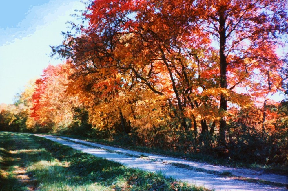 sassafras_along_country_road
