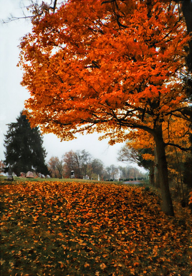 maple tree in foreground, cemetery in october