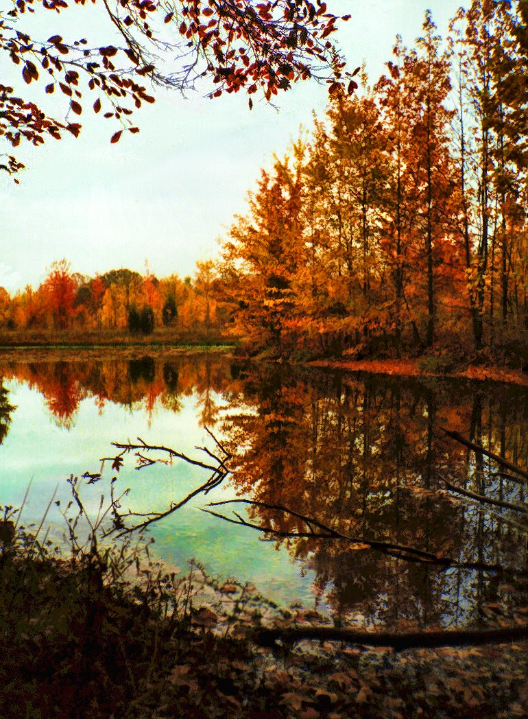 view around pond in autumn