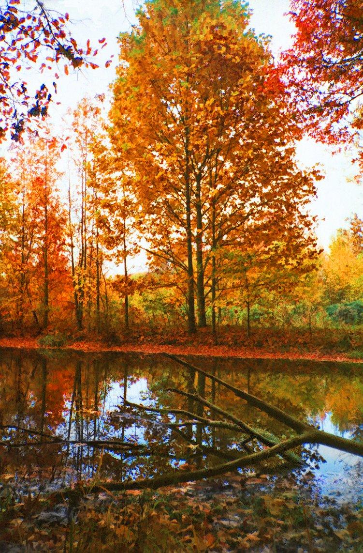 view around pond in autumn