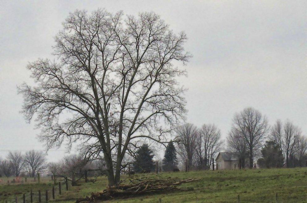 december pastoral