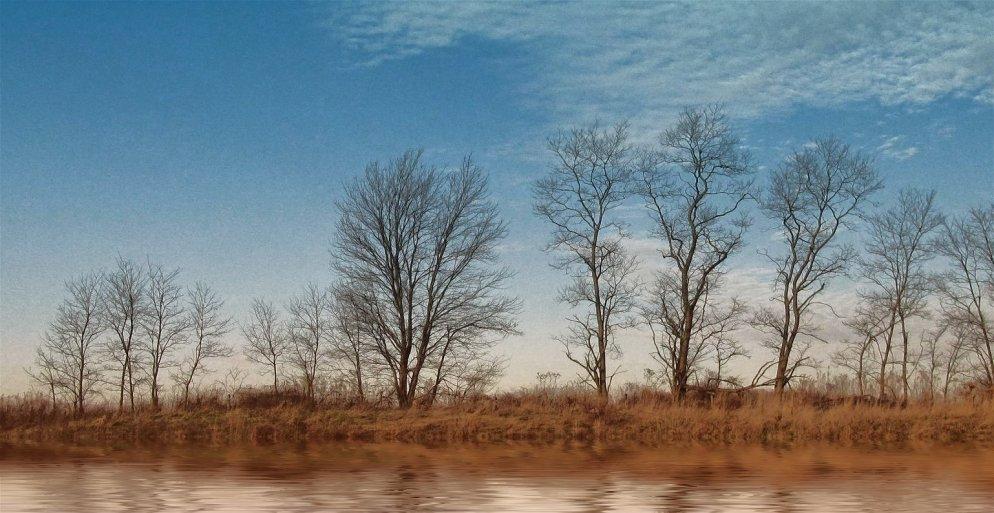 indiana sassafras trees near water