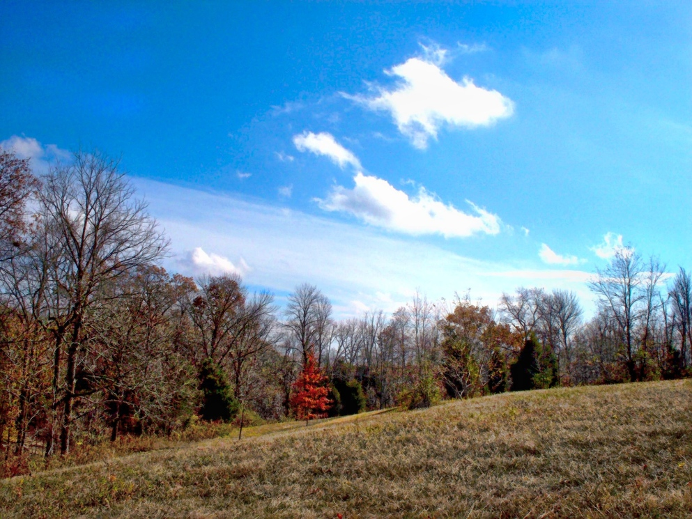 blue sky over woods and field, november in indiana