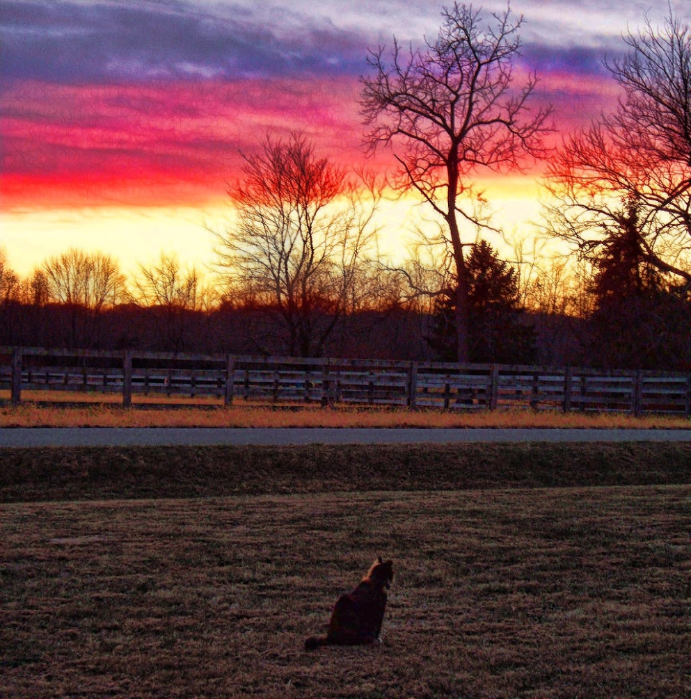 november sunset, callie in foreground