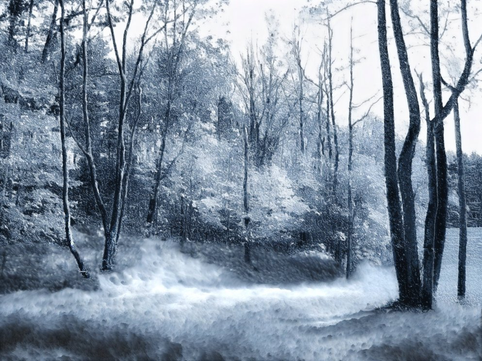 light snow in a secret wooded hollow