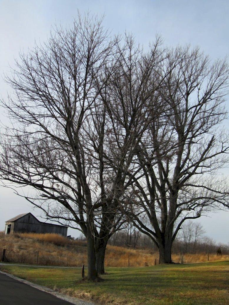 november tree under overcast sky