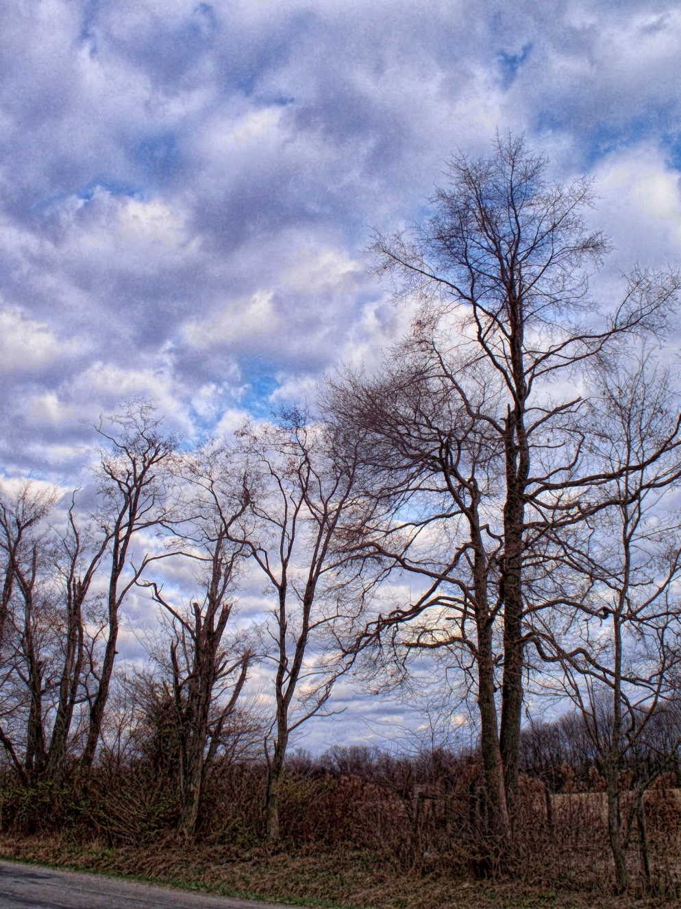 bare trees against december sky