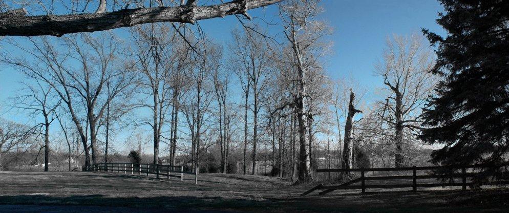 winter afternoon landscape
