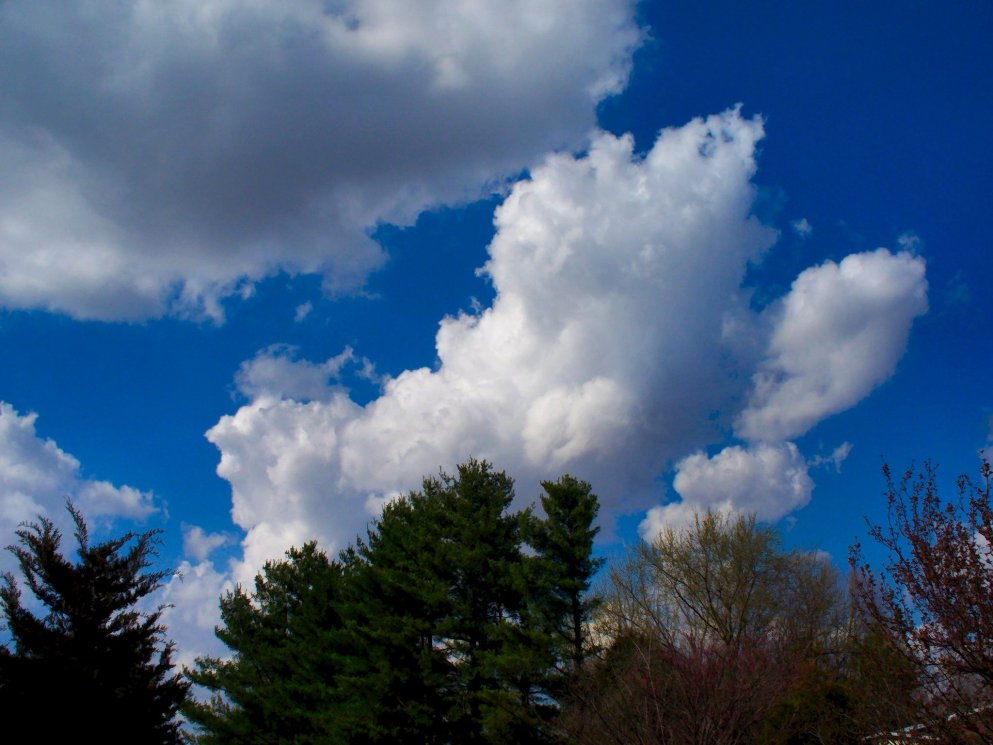 beautiful spring sky and clouds over pine trees