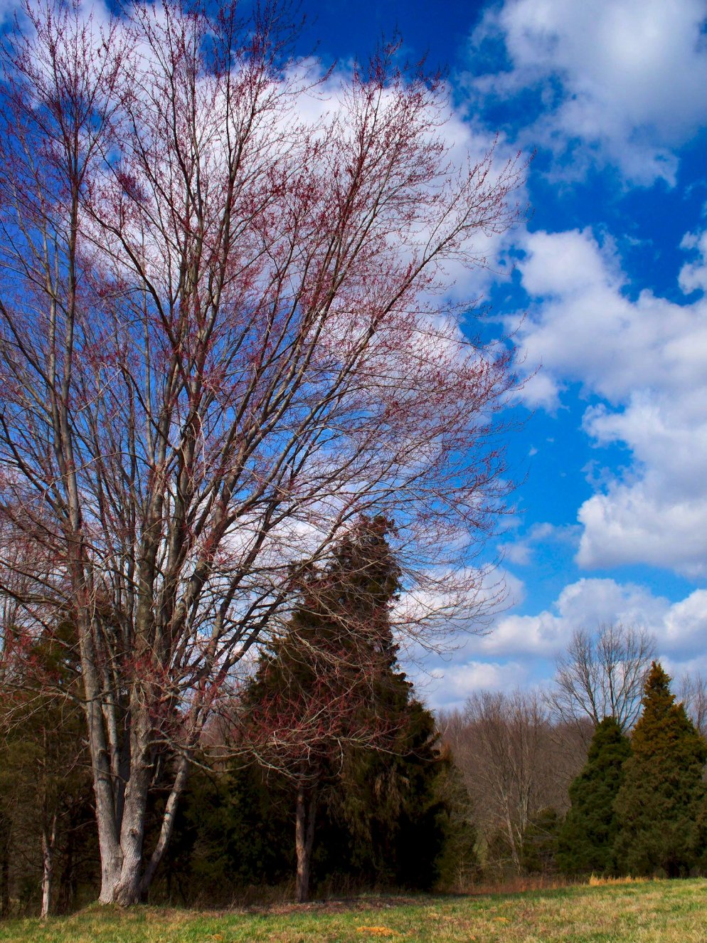 budding tree and march landscape with clouds and blue sky