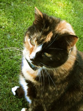 Cats never strike a pose that isn't photogenic. ~ Lillian Jackson Braun