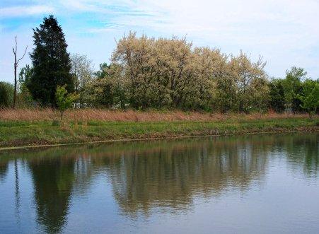 honey locust and pond scene