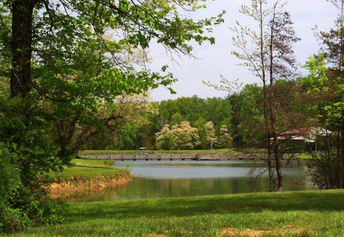 honey locust and lake landscape