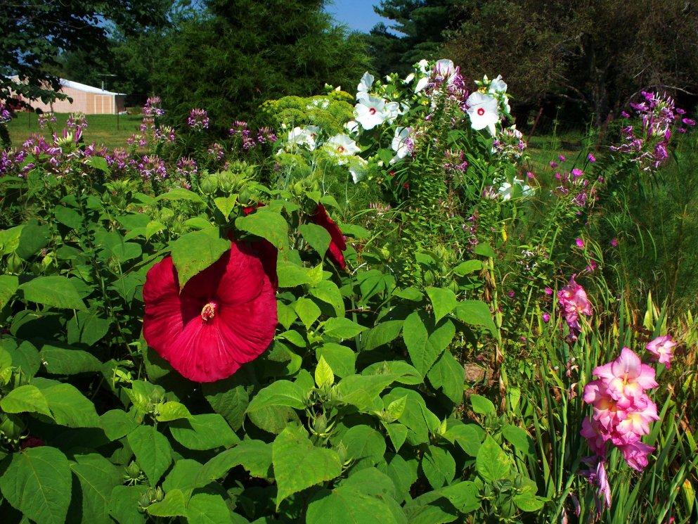 late july garden scene