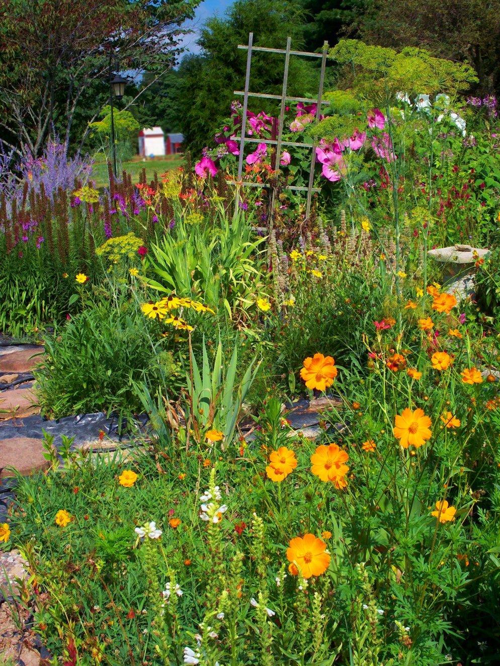 colors of summer in my garden