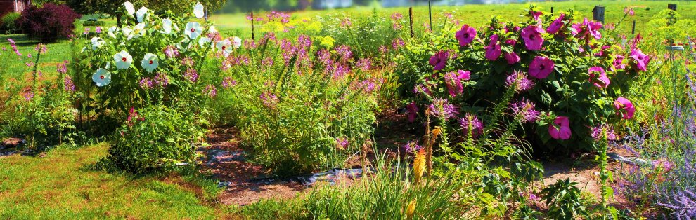 featuring spiderflower, dill, hibiscus, russian sage
