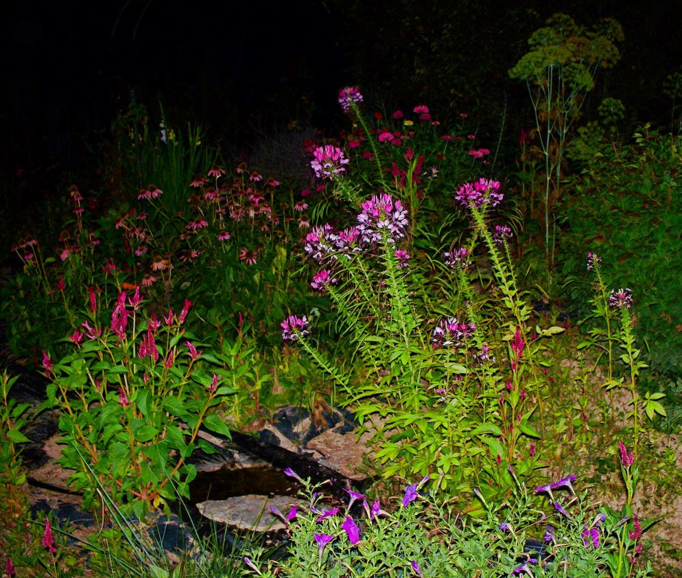 night scene in my garden