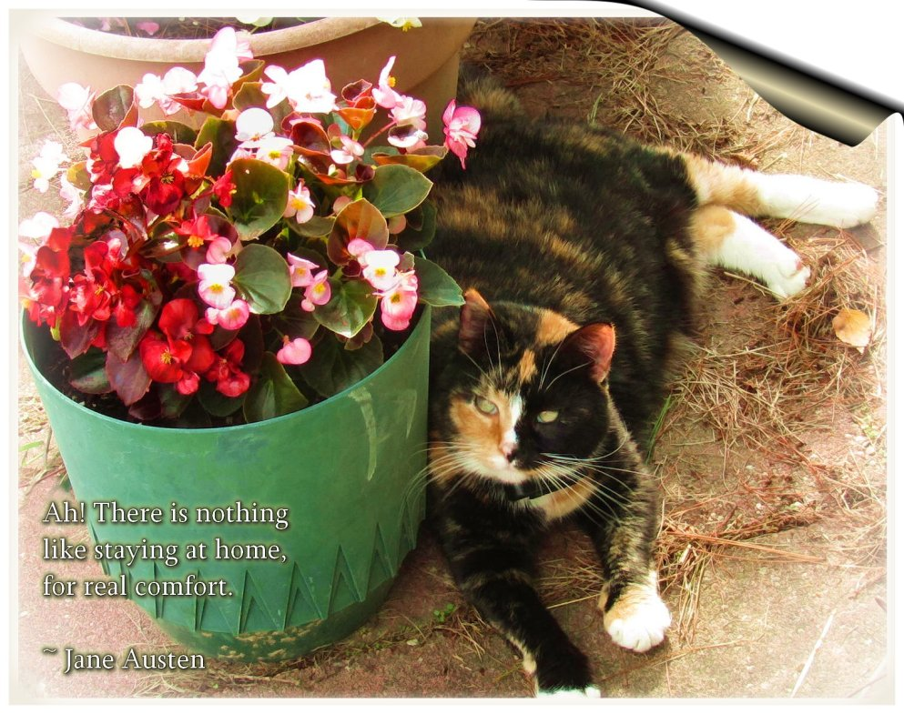 begonias and comfy callie