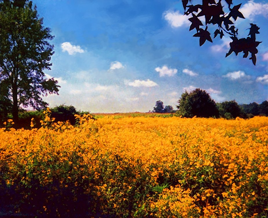 landscape_w_wild_sunflowers