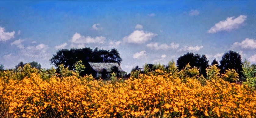 old barn with wild sunflowers