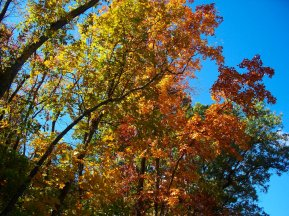 autumn colorful trees, south indiana