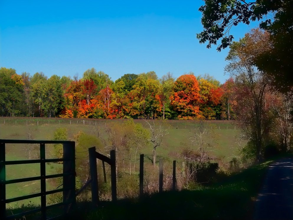 october scene, woods and pastureland, south indiana