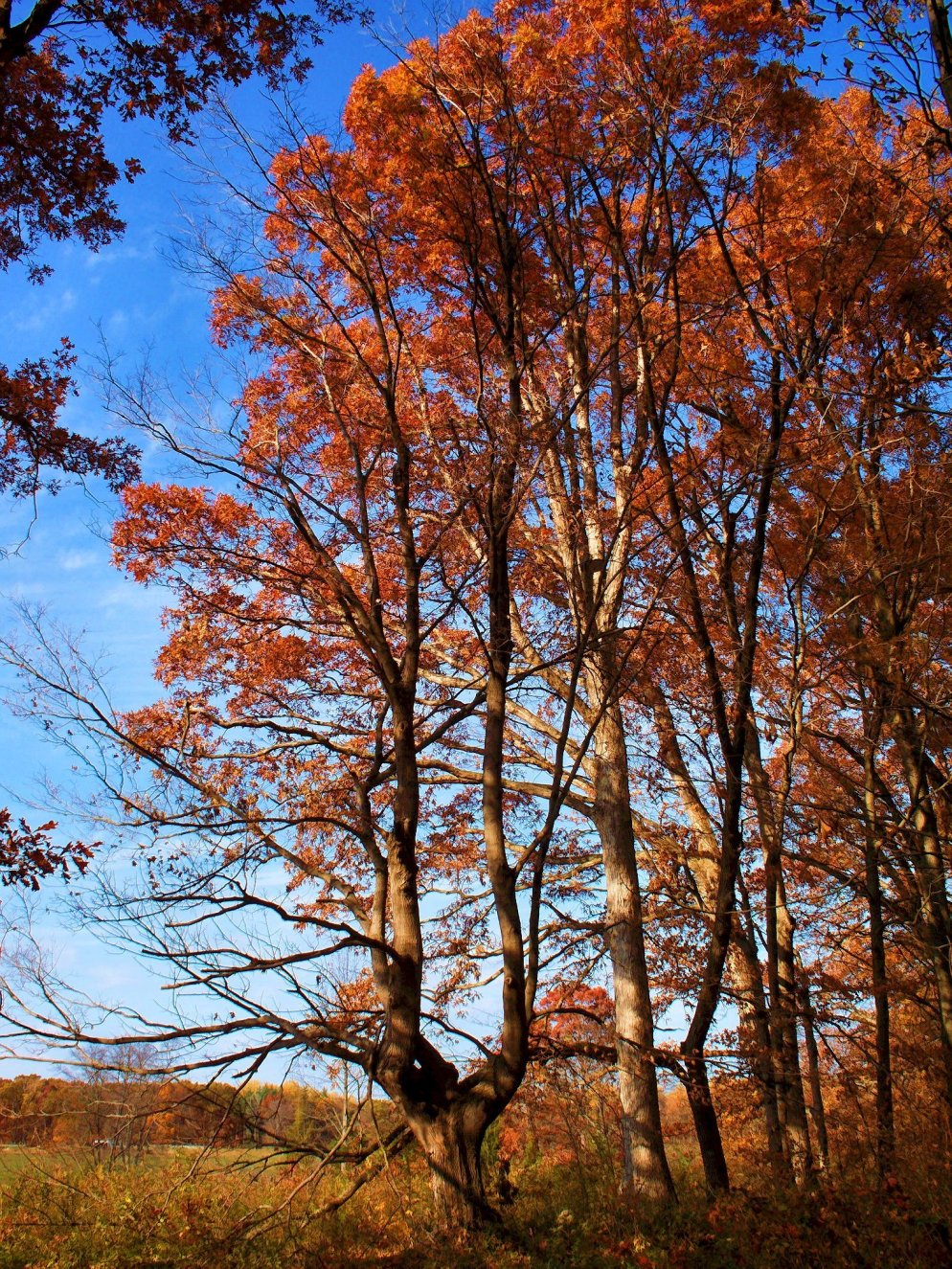 colorful october trees