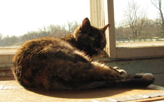 Like a graceful vase, a cat, even when motionless, seems to flow. ~ George F. Will