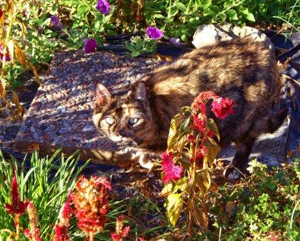 missy in october garden