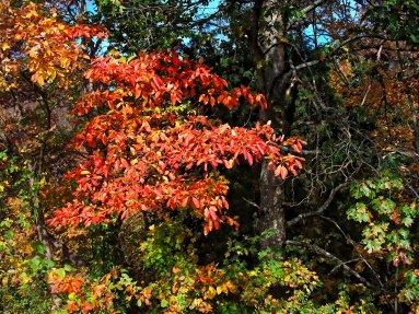 autumn sumac, south indiana