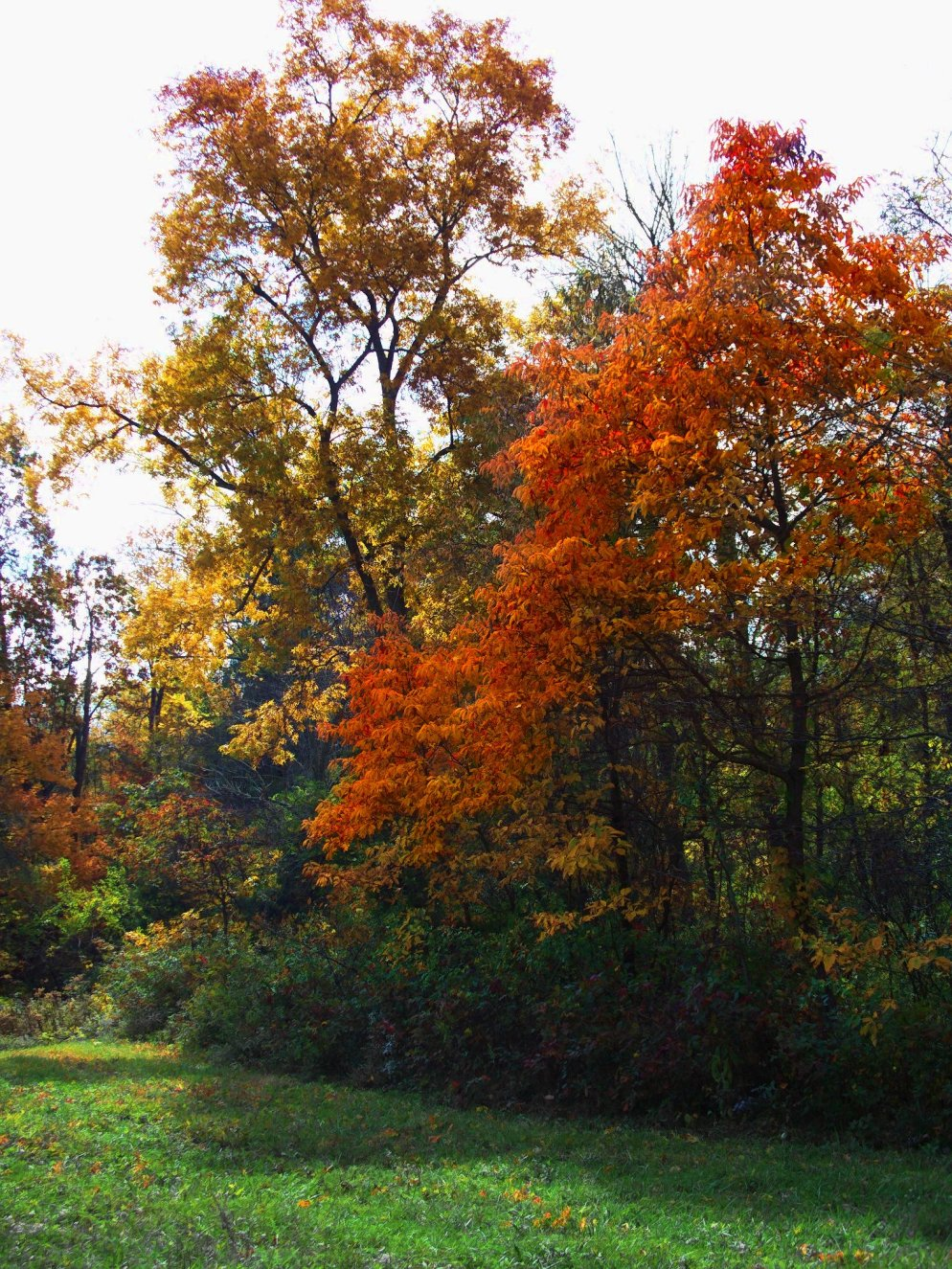 beautiful october trees, southern indiana