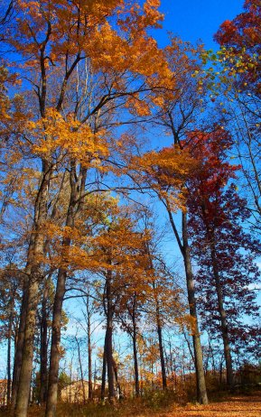 colorful october trees, south indiana