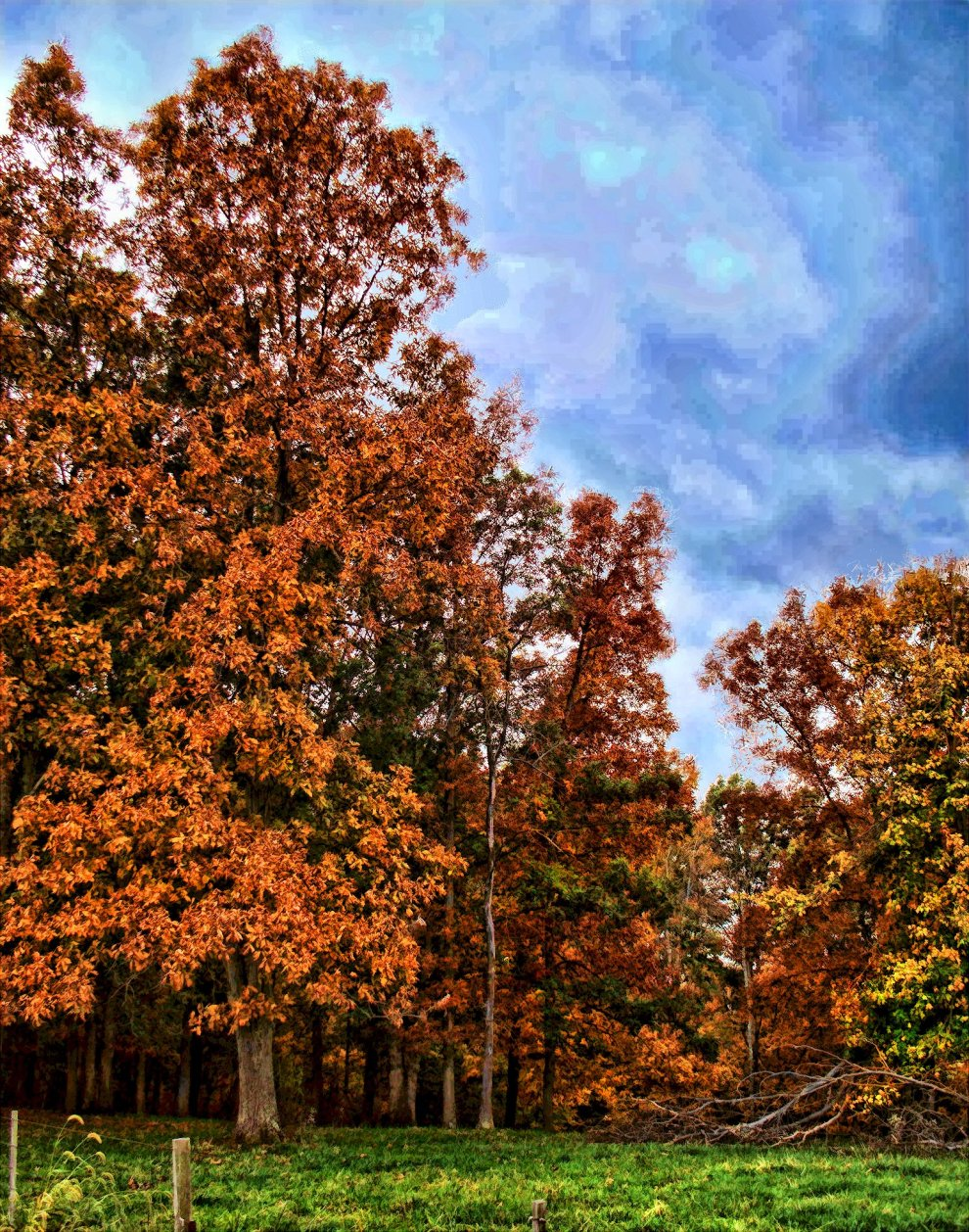 colorful october woods in south indiana
