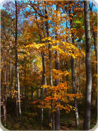october woods scene, south indiana