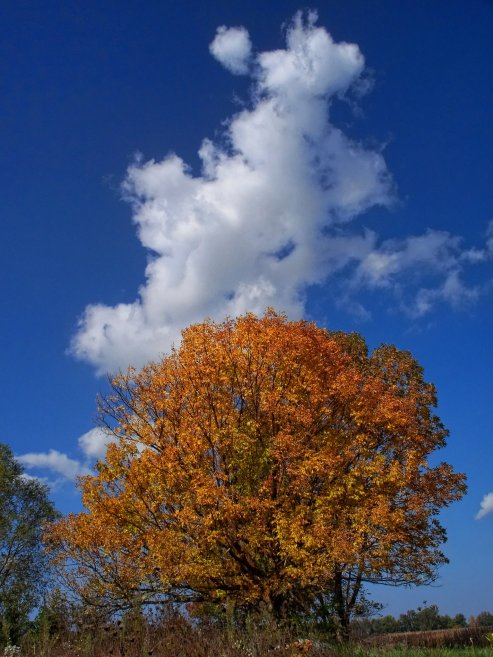 october tree with pretty cloud