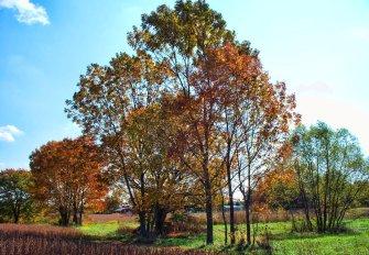 sunny october trees