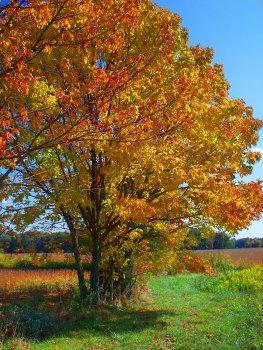 sunny october trees scene with birdhouse