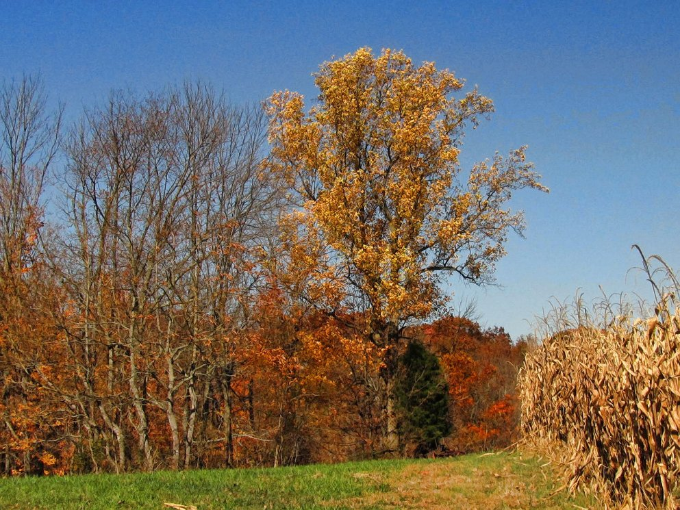 beautiful autumn scenery in southern indiana