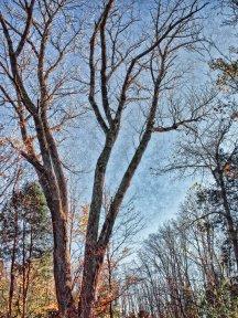 late fall tree scene, indiana