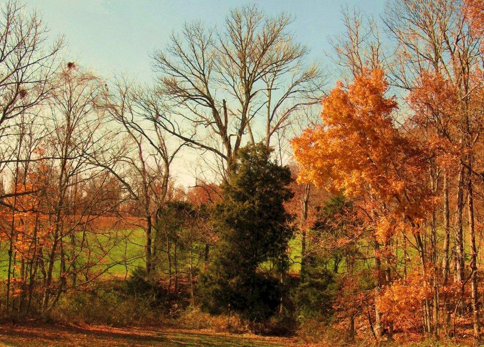 late autumn scenery, indiana