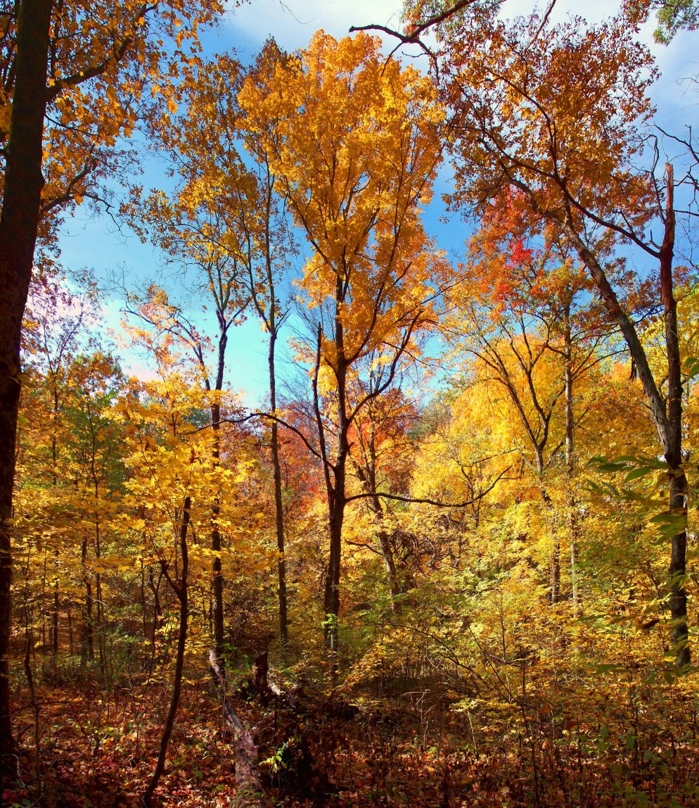 spectacular october scene in southern indiana woods