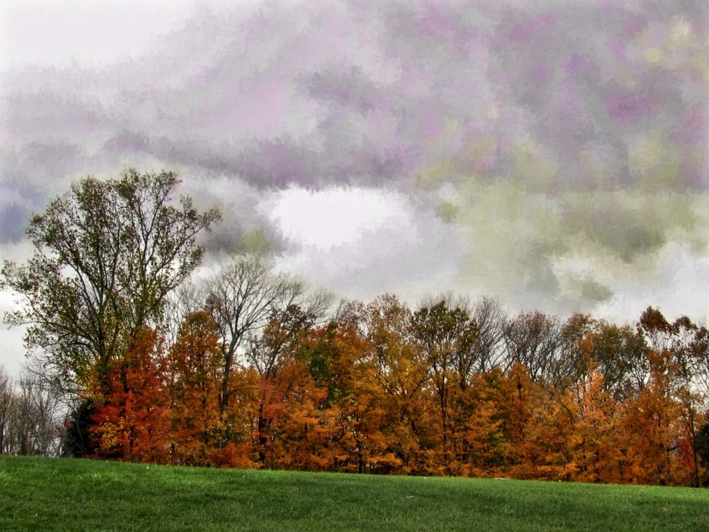 october woods and stormy sky