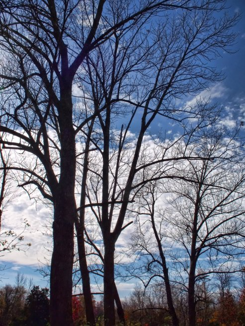 bare trees against october sky, indiana