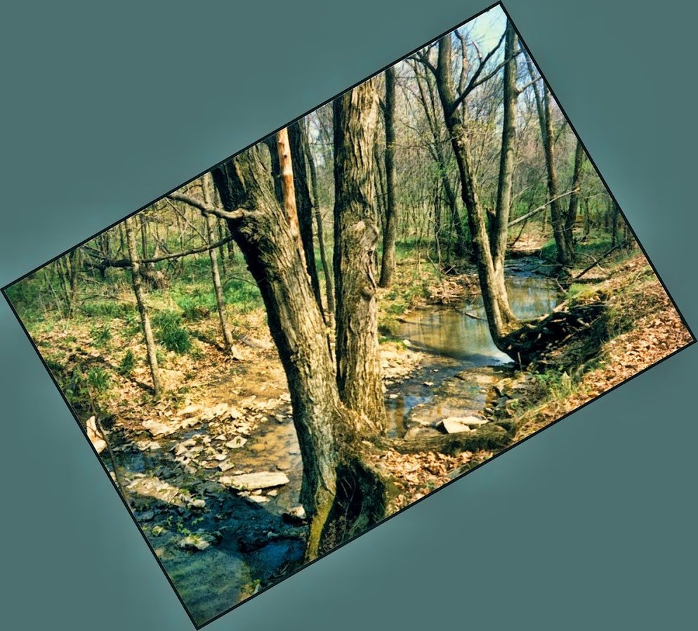 trees over creek in april, southern indiana