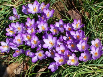 early_spring_beauty