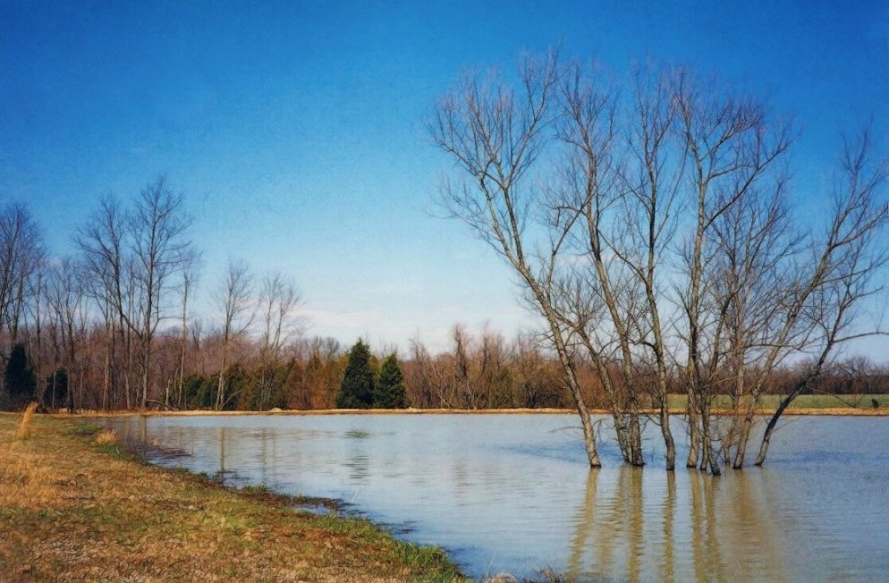 a flooded pond in early april, south indiana
