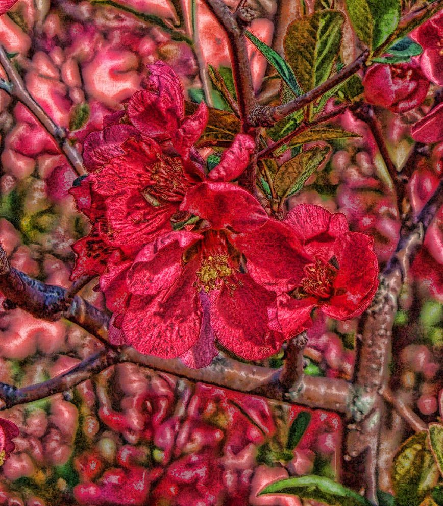 quince blossoms with painterly filter
